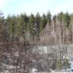 Красивите гори около хотела